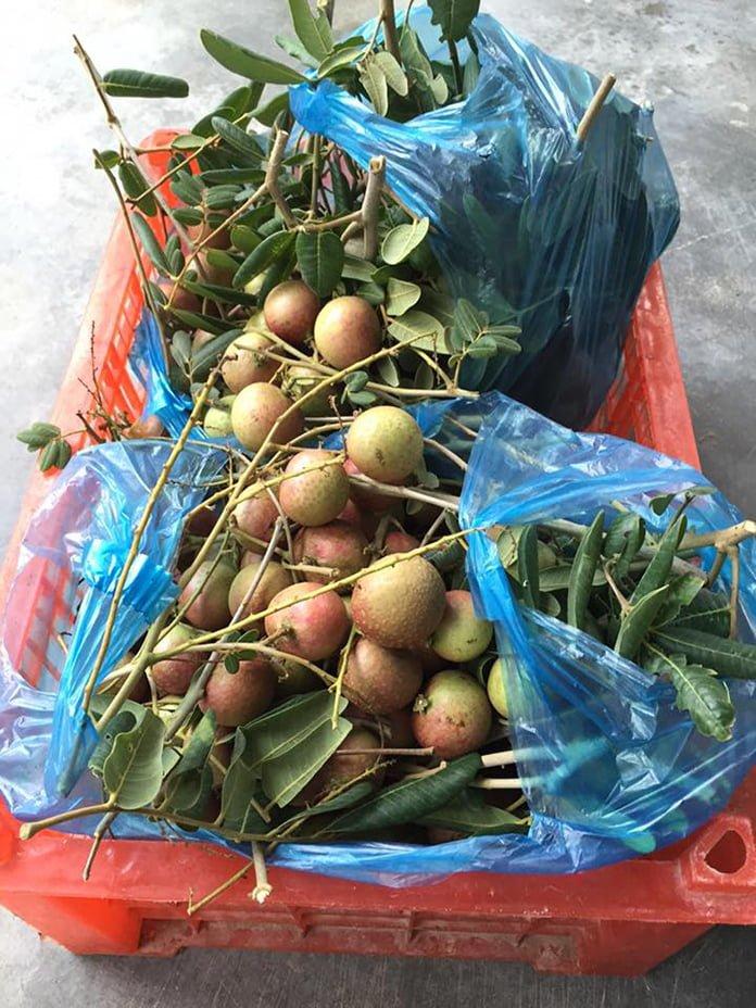 Quán ăn Vườn Dừa
