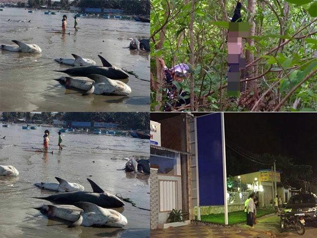 Điểm báo Bình Thuận