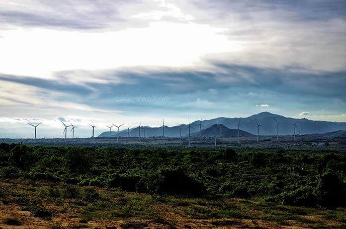 Ngược nắng check-in cánh đồng gió Tuy Phong