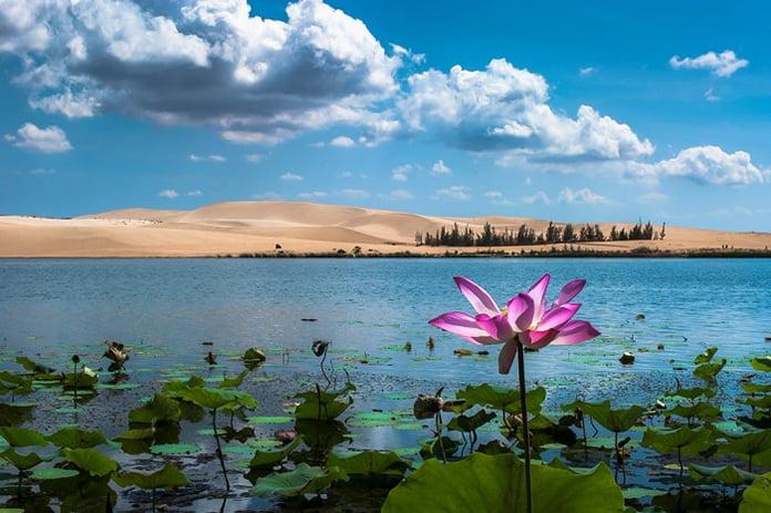 Hồ sen ở Khu du lịch