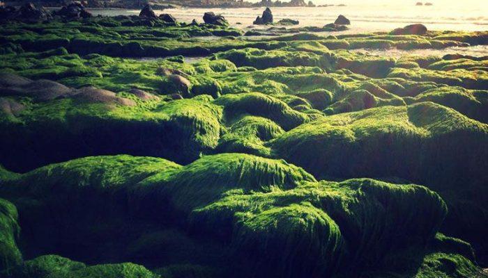 Mùa rêu ở Cổ Thạch