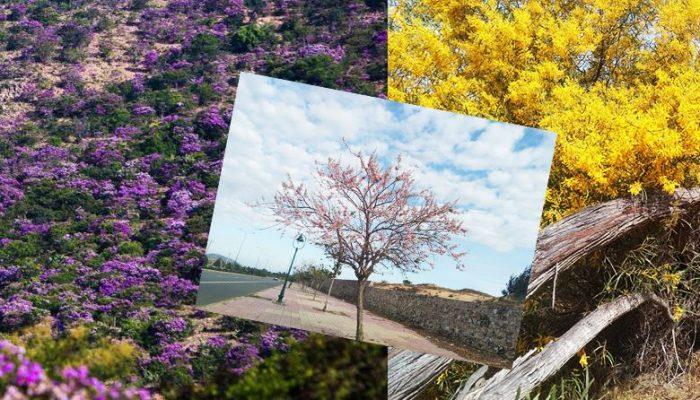 Top 03 mùa hoa sống ảo ở Bình Thuận