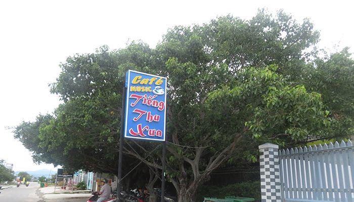 Cafe Tiếng Thu Xưa