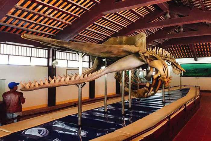 Xương cốt cá voi tại Vạn An Thạnh