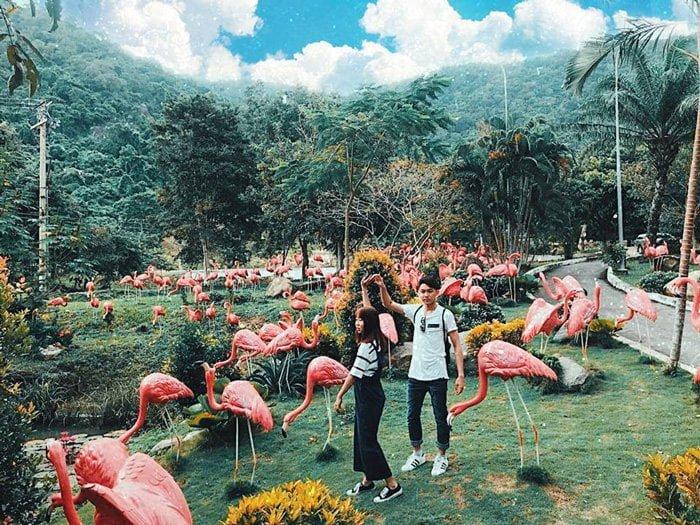 Vườn hồng hạc ở Tà Cú